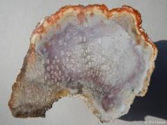 psaronius-3-brasiliense-perm-rotliegend-brasilien-araquaina-2