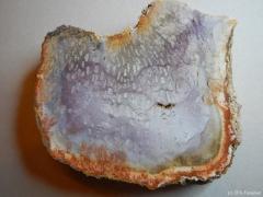 psaronius-2-brasiliense-perm-rotliegend-brasilien-araquaina