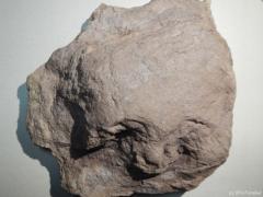 chirotherium-barthii-2