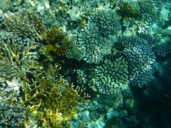 korallengarten1