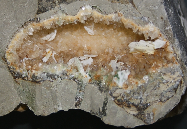 aspidoceras-1
