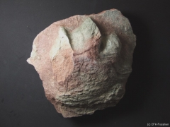 b5_chirotherium-barthi