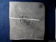 k800_keichosaurus