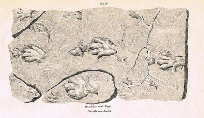 chirotherium-abbildung-aus-oken-1843-001