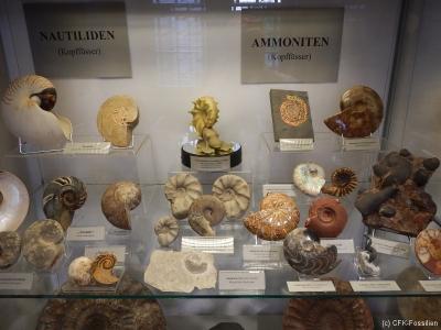 Nautiliden Ammoniten