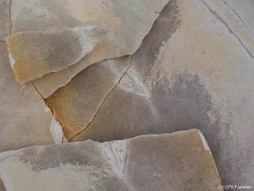 Koepfchen-mit-Deckplatten-klein