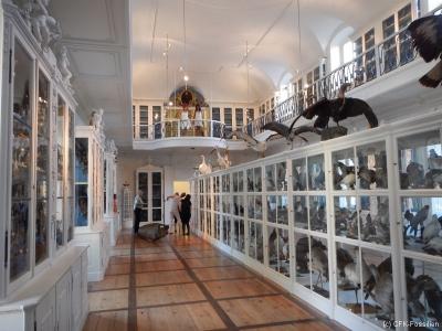 vogelsaal